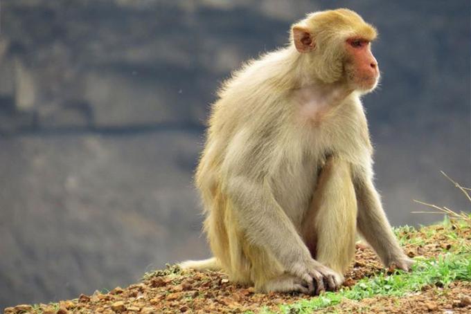 Mơ thấy con khỉ